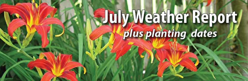July Weather Report