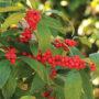 kcg-nov16-cover-winter-red-winterberry